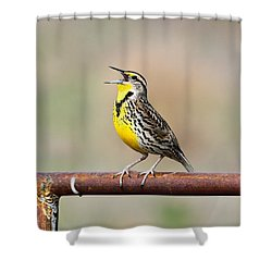 A Morning Song Shower Curtain by Michael Morse