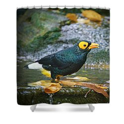 Shower Curtain featuring the photograph A Mynah by Judy Kay