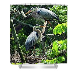 A Nesting Pair Of Great Blue Herons Shower Curtain