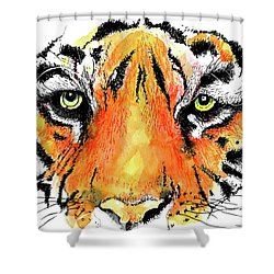 A Nice Tiger Shower Curtain by Terry Banderas
