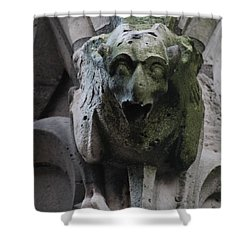 Shower Curtain featuring the photograph A Notre Dame Griffon by Christopher Kirby