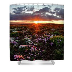 Shower Curtain featuring the photograph A Nuttalls Linanthastrum Morning by Leland D Howard