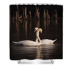 A Painting Of A Pair Of Mute Swans Shower Curtain