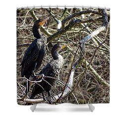 A Pair Of Cormorants Shower Curtain by Melissa Messick