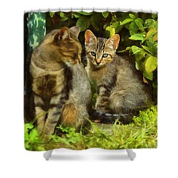 A Pair Of Feral Cats Shower Curtain