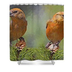 A Pair Of Male Red Crossbills - Painted Shower Curtain
