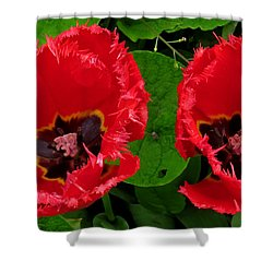 A Pair Of Poppies Shower Curtain