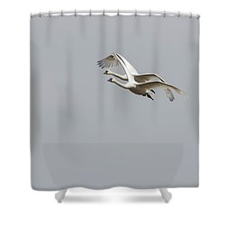Shower Curtain featuring the photograph A Pair Of Swans 2017-1 by Thomas Young