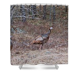 Shower Curtain featuring the photograph A Pair Of Turkeys 1152 by Michael Peychich