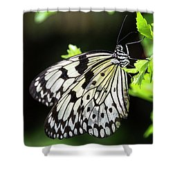 Shower Curtain featuring the photograph A Paper Kite Butterfly On A Leaf  by Saija Lehtonen
