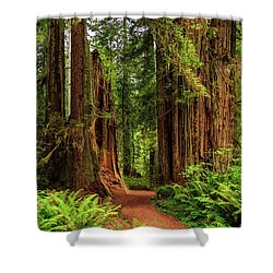 Shower Curtain featuring the photograph A Path Through The Redwoods by James Eddy