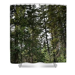 A Path Through The Trees Shower Curtain