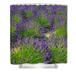 A Pattern Of Lavender Shower Curtain