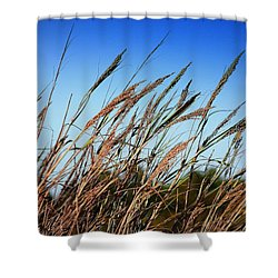 Shower Curtain featuring the photograph A Picture Worth A Thousand Words by Debra Forand