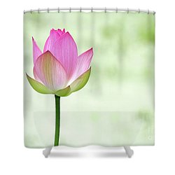 A Pink Lotus Shower Curtain by Sabrina L Ryan