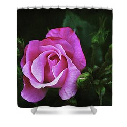 A Pink Rose Shower Curtain by Trina Ansel