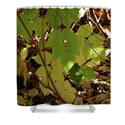 Shower Curtain featuring the photograph A Plant's Various Colors Of Fall by DeeLon Merritt