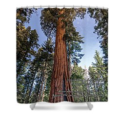 A Poem Lovely As A Tree.   Shower Curtain