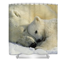 A Polar Bear And Her Cub Napping Shower Curtain