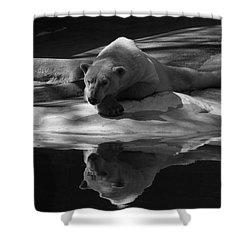 A Polar Bear Reflects Shower Curtain by Karol Livote