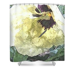 A Pop Of Pansy Shower Curtain