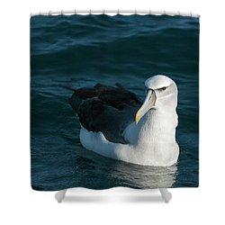 A Portrait Of An Albatross Shower Curtain