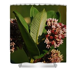 Shower Curtain featuring the photograph A Pretty Bouquet by Ramona Whiteaker