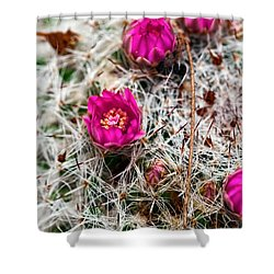 A Prickly Bed Shower Curtain by Christopher Holmes