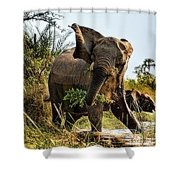 A Protective Mama Elephant With Calf  Shower Curtain