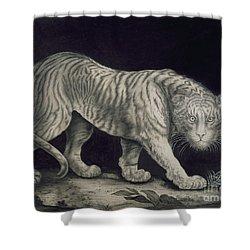 A Prowling Tiger Shower Curtain by Elizabeth Pringle