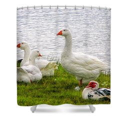 Shower Curtain featuring the photograph A Quiet Moment by Joan Bertucci