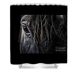 A Race Horse Named Tikki Shower Curtain
