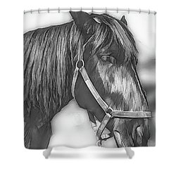 A Real Beauty Shower Curtain