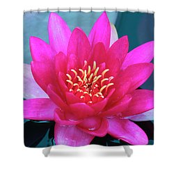 A Red And Yellow Water Lily Flower Shower Curtain