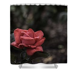 A Red Beauty Shower Curtain by Ed Clark