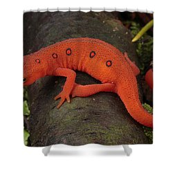 A Red Eft Crawls On The Forest Floor Shower Curtain