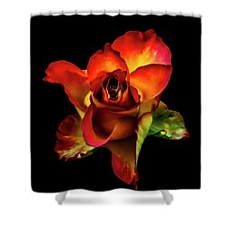 A Red Rose On Black Shower Curtain