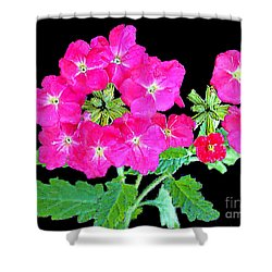 Shower Curtain featuring the photograph A Ring Of Verbena by Merton Allen