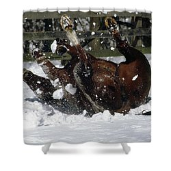 A Roll In The Snow Shower Curtain by Nicki McManus