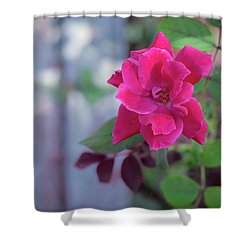A Rose And A Hard Place Shower Curtain