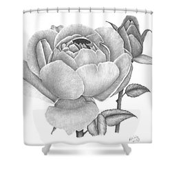 A Rose Bloom Shower Curtain by Patricia Hiltz