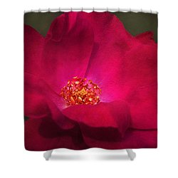 A Rose For My Love Shower Curtain by Kathi Mirto