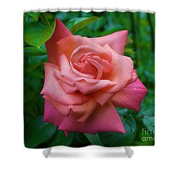A Rose In Spring Shower Curtain
