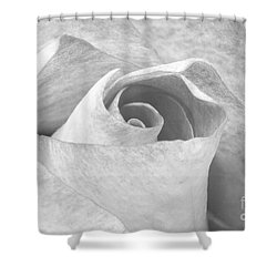 A Rose Is A Rose Black And White Floral Photo 753  Shower Curtain