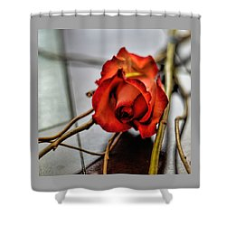 Shower Curtain featuring the photograph A Rose On Bamboo by Diana Mary Sharpton