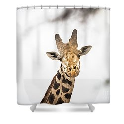A Rothchild Shower Curtain