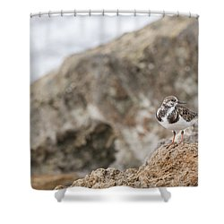 A Ruddy Turnstone Perched On The Rocks Shower Curtain