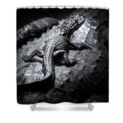 A Safe Harbor Shower Curtain