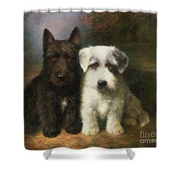A Scottish And A Sealyham Terrier Shower Curtain by Lilian Cheviot