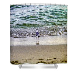 A Seagull Looking Out To Sea Shower Curtain